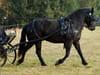 Usage équitation